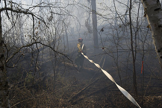 Firefighter in a Burnt Forest with a Hose